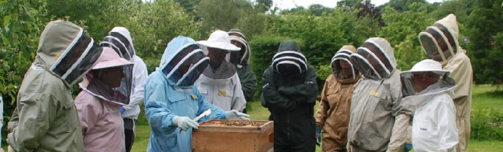 Beekeepers examine a hive